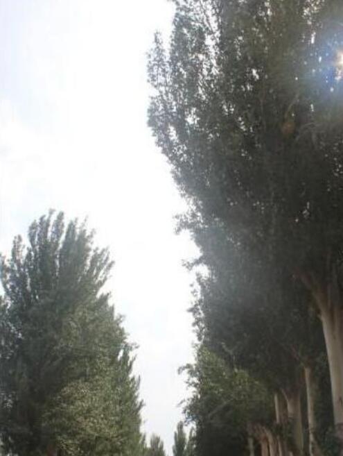 娱乐世界注册最大的沙漠森林公园