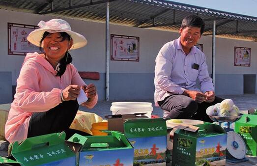 从陕北一个村庄看促进小农户和现代农业发展有机衔接