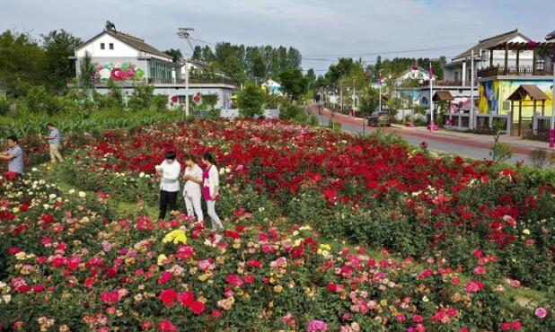洛南县铺满鲜花的玫瑰小镇
