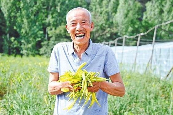 洛南县万亩黄花菜带动2000贫困户