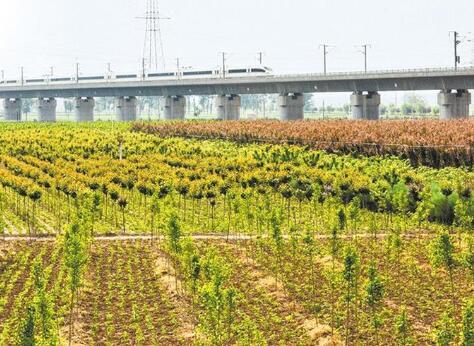 渭南市全力推进造林绿化工作纪实