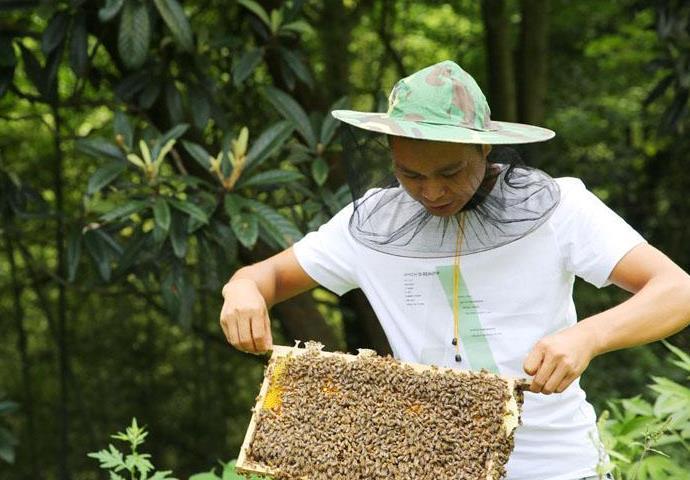 安康紫阳县洄水镇联沟村,85后小伙钟少江养土蜂5年,已成了养蜂大户。今年他养蜂的规模达到1500箱,还带动附近6个村、200户贫困户养蜂。200户贫困户总计养蜂1500多箱。.jpg