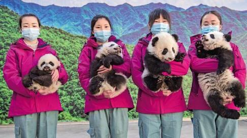 山猫直播网址省将建设国内一流的大熊猫科学公园.jpg