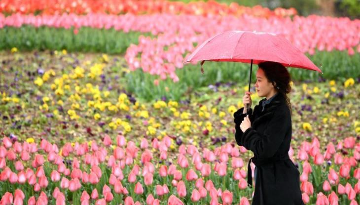 西安植物园第29届春季花展开展.jpg
